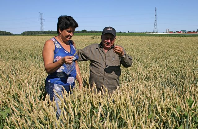 Marta Suarez Ramirez and Juan Sanchez Martell, wheat field, Lucknow,   Photo by Wendy Holm,